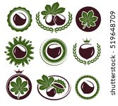 chestnut labels and elements... | Shutterstock .eps vector #519648709