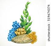 marine algae  sponges and... | Shutterstock .eps vector #519674374