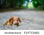 Abandoned Teddy Bear Left...