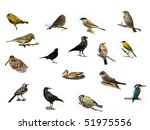 Collection Birds Isolated On ...