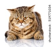 Stock photo brown striped cat with yellow eyes lying on white background 519771034