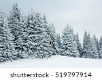 Mountain Winter Forest