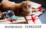 Ginger Cat And Christmas Gifts...