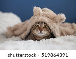 Cute Bengal Cat Wearing Hoodie...