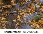 Fallen Colorful Maple Leaves I...