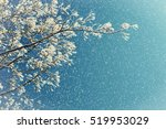 winter frosty tree branches of... | Shutterstock . vector #519953029