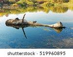 Big Wooden Log Floating On The...