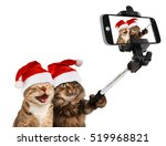 Funny Cats Are Taking A Selfie...