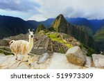 Llama Standing At Machu Picchu...
