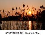 Reed Bed At A Shore Of A Lake