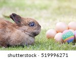 Easter With Egg And Baby Bunny...