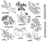 spices and herbs vector set to... | Shutterstock .eps vector #520021459