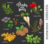 spices and herbs vector set to... | Shutterstock .eps vector #520021531