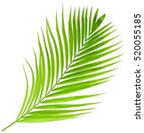 Green Palm Leaf Isolated On...