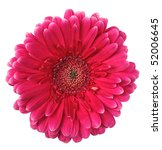 Pink Flower Of Gerbera Isolate...