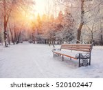 Park Bench And Trees Covered B...