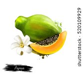 Papaya Illustration Isolated O...