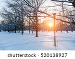 Winter Sunset In Snow Covered...
