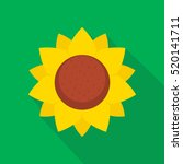 sunflower flat design vector... | Shutterstock .eps vector #520141711