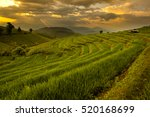 terraced rice field at sunset ... | Shutterstock . vector #520168699