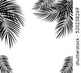 Black Palm Leaf On White...
