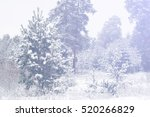 Winter Landscape. Frost Frost...