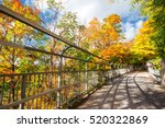 autumn leaves in rochester city ... | Shutterstock . vector #520322869