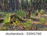 old stumps with moss | Shutterstock . vector #52041760