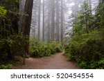 Trail in Redwood National Park, California - stock photo