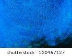 Deep Blue Peacock's Feather...