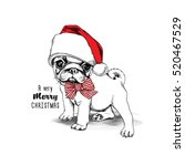 christmas card. puppy pug in a... | Shutterstock .eps vector #520467529