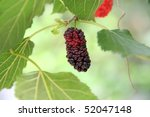 Berry fruit in nature - stock photo