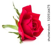 Stock photo red rose flower head isolated on white background cutout 520516675