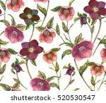 hand drawn watercolor hellebore ... | Shutterstock . vector #520530547