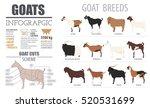 goat breeds infographic... | Shutterstock .eps vector #520531699