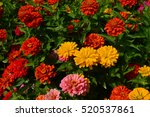 Beautiful Flowerbed With...