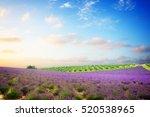 famous provence lavender scene  ... | Shutterstock . vector #520538965