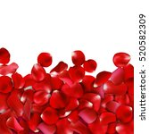 red rose petals on white... | Shutterstock .eps vector #520582309