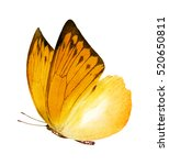 Watercolor Butterfly   Isolated ...