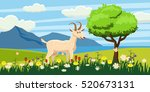 Goat Grazing In A Meadow On A...