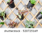 Plants In Pots   Wall Decoration