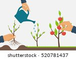 process of growth of tree from... | Shutterstock .eps vector #520781437