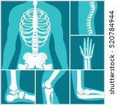 set of xray of human human... | Shutterstock .eps vector #520784944
