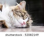 Stock photo portrait of the cat 52082149