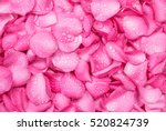 Stock photo the fresh pink rose petal background with water rain drop 520824739