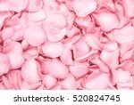 Stock photo the fresh light pink rose petal background with water rain drop 520824745