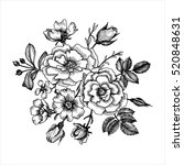 vintage vector floral... | Shutterstock .eps vector #520848631