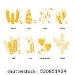 cereal grains vector icons.... | Shutterstock .eps vector #520851934