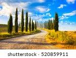 Italian Cypress Trees Rows And...