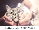 Stock photo lovely cat in human hands vintage effect love for the animals 520870675
